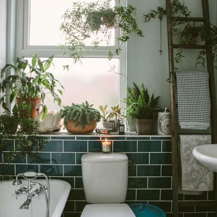 plantes vertes sur le rebord de la fenêtre salle de bains