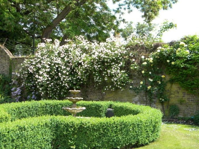 rosiers grimpants dans un jardin à l'anglaise