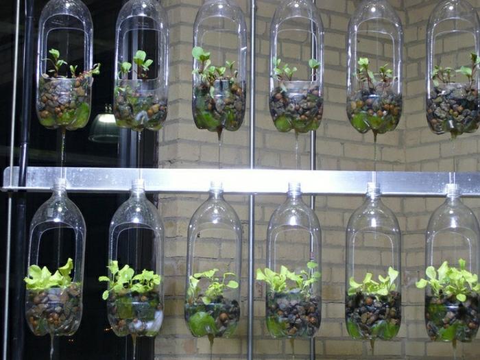 végétaux dans des bouteilles