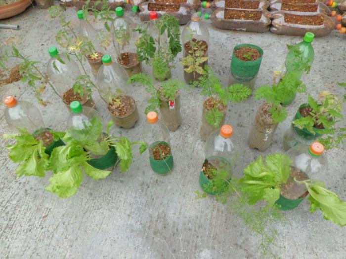 bouteille plastique pour jardin terrase