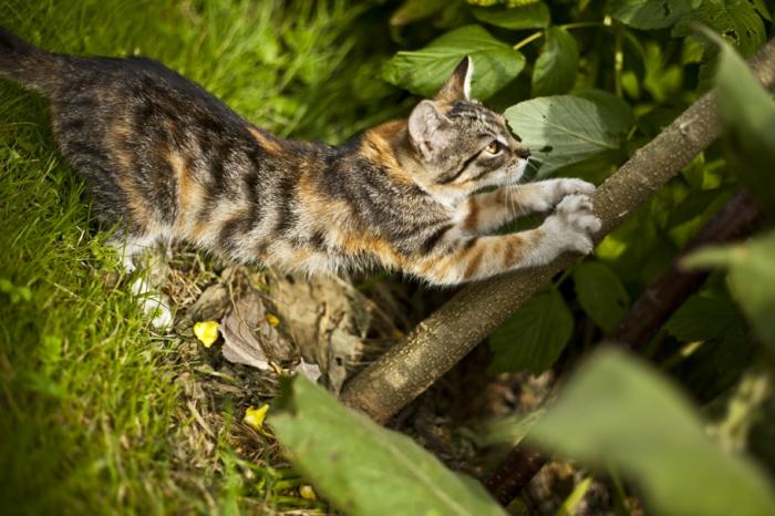 chat qui griffe un arbre