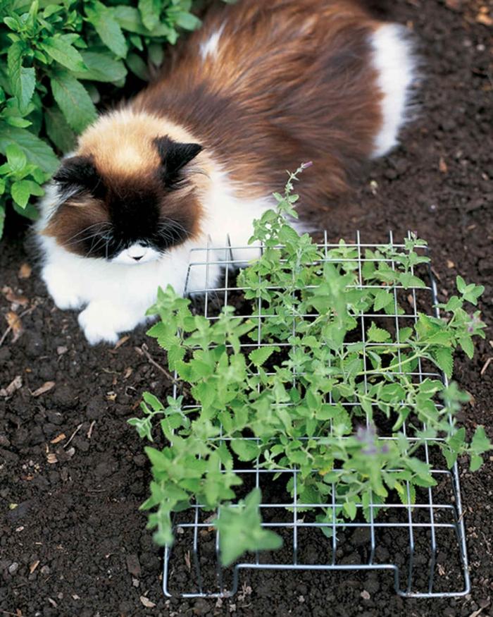 éloigner les chats des plantes