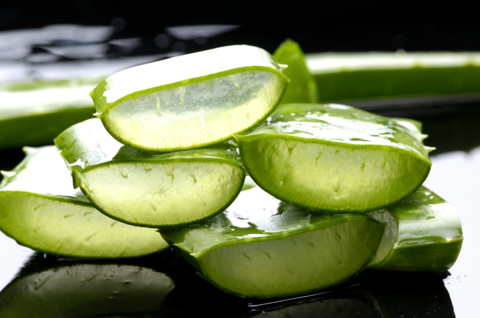 plante aloe vera pour cultiver à la maison
