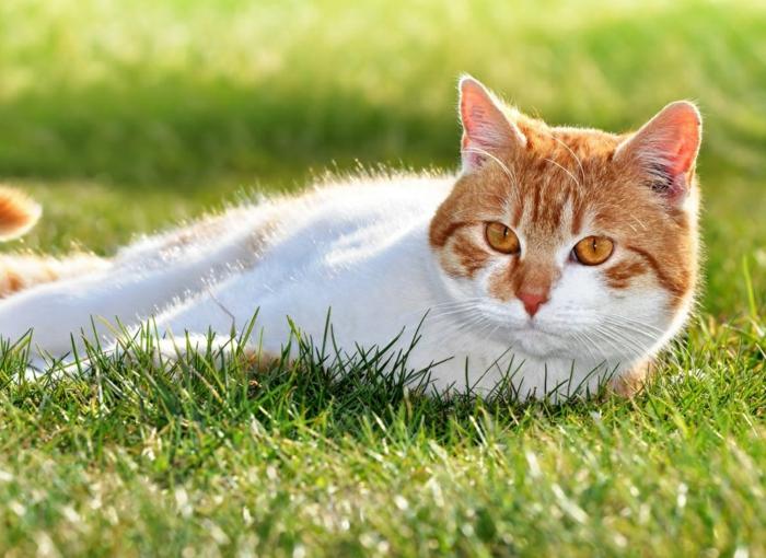 Comment loigner les chats du jardin petits trucs savoir - Comment cuire les petit pois du jardin ...