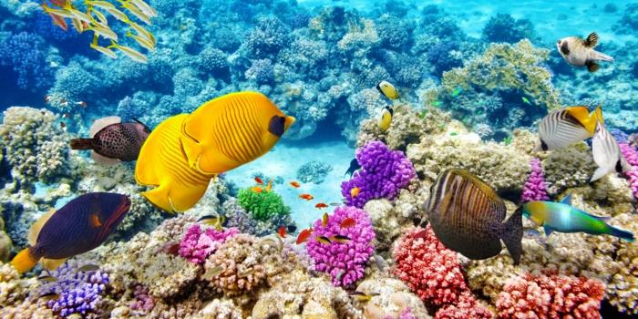les plus beaux endroits du monde grande barrière de corail