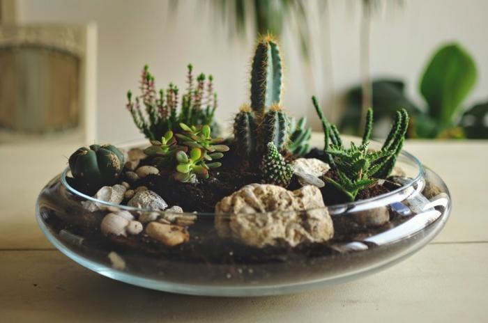 petit jardin de rocaille