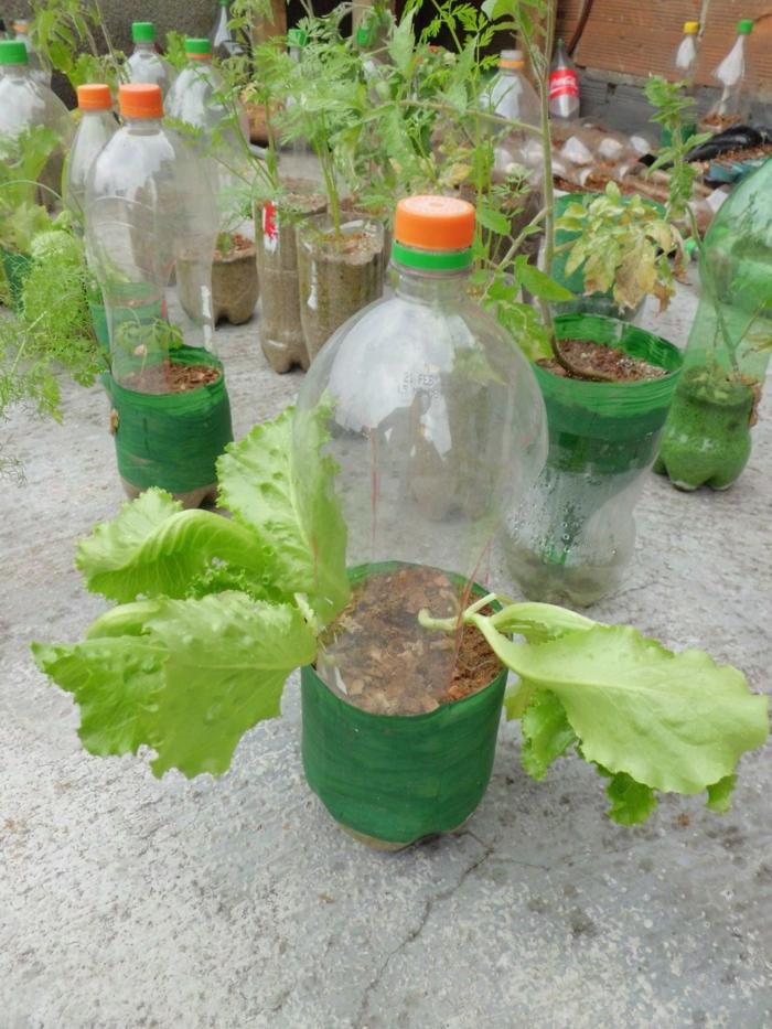 plantes dans une bouteille plastique