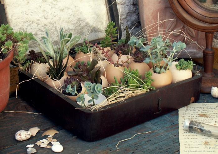 plantes succulentes décoration