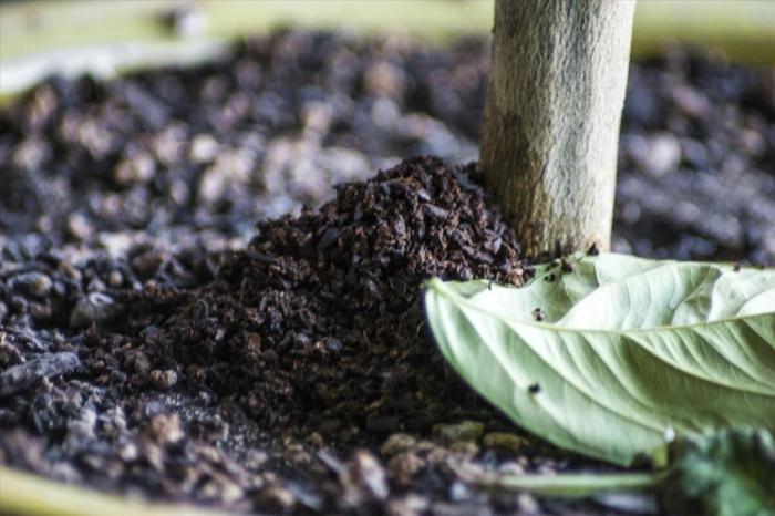pour les plantes marc de café