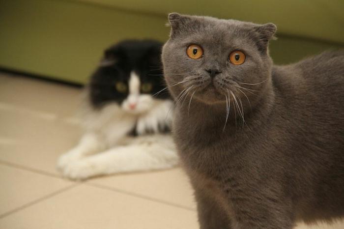 Comment loigner les chats du jardin petits trucs savoir - Comment eloigner les chats de mon jardin ...