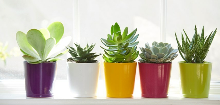 succulentes pots de terre cuite