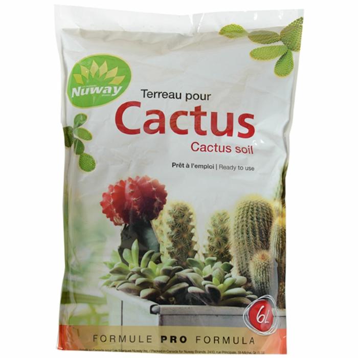 tarreau cactus plante aloe vera