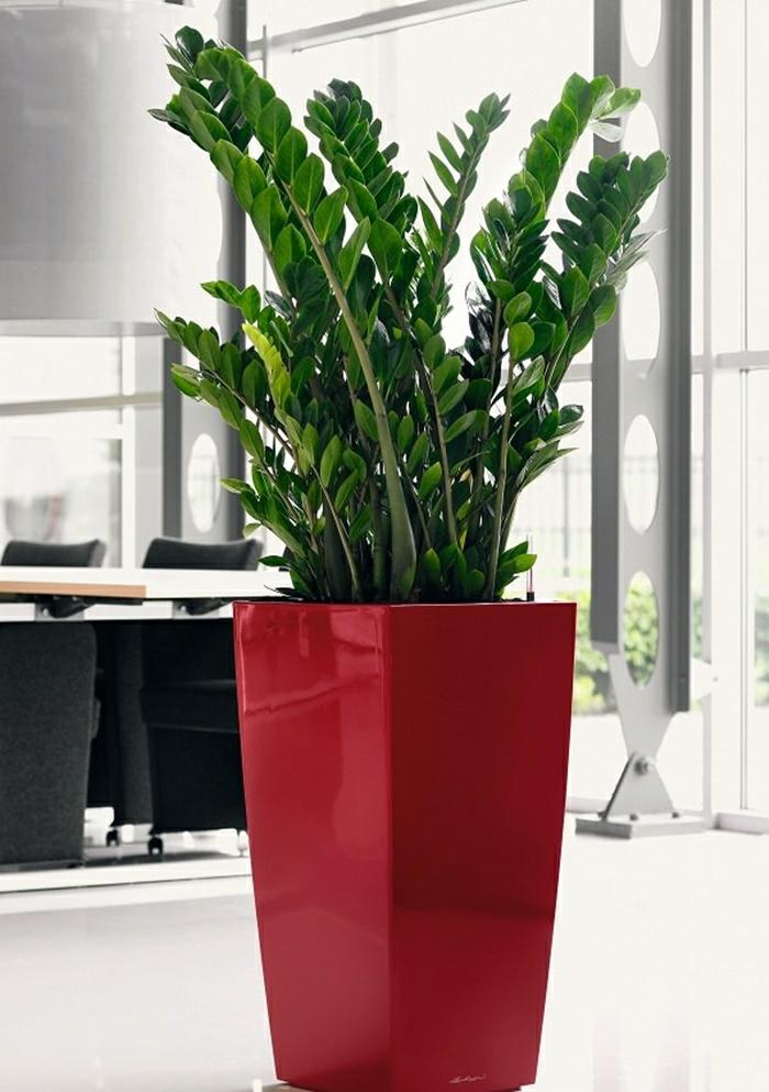 Zamioculcas la seule plante que vous ne tuerez pas for Plante zamioculcas