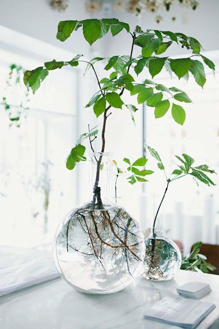 arbre plante aquatique