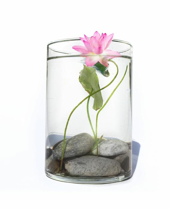La plante aquatique d coration int rieur et ext rieur for Plantes et jardin exterieur