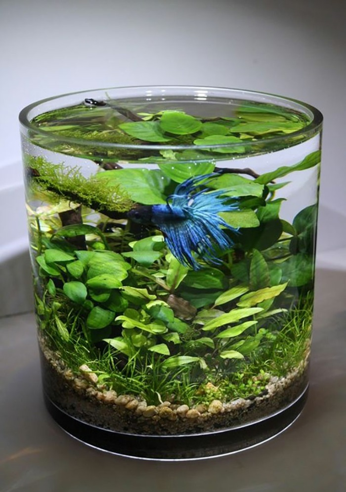 plante aquatique dans pot