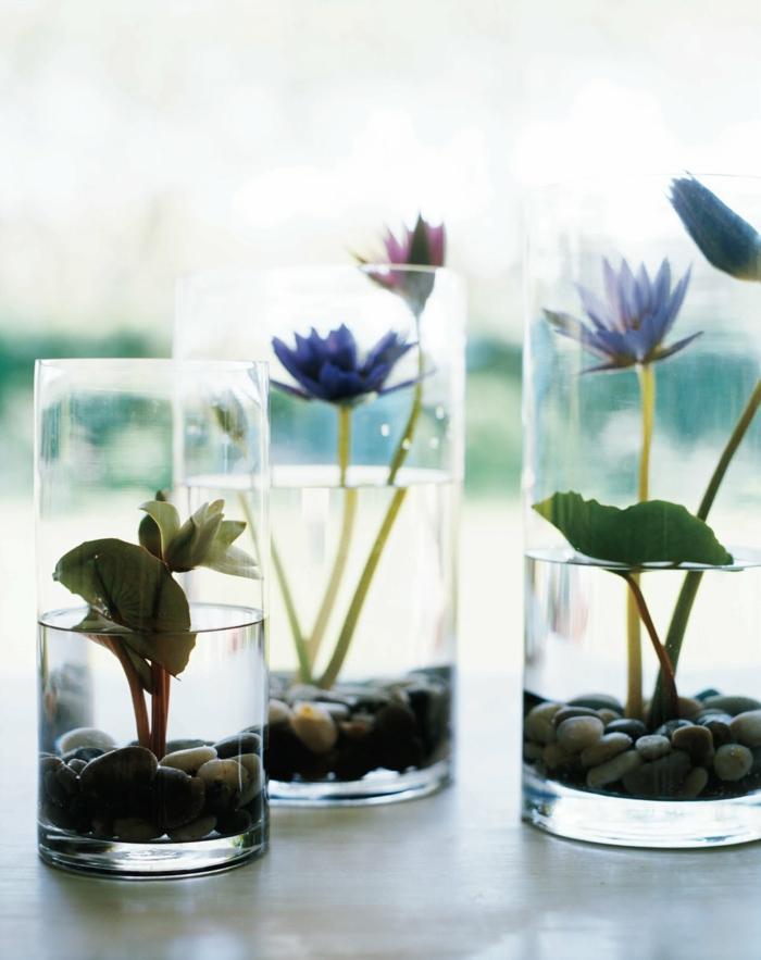 inspirations pour jardin avec plante aquatique