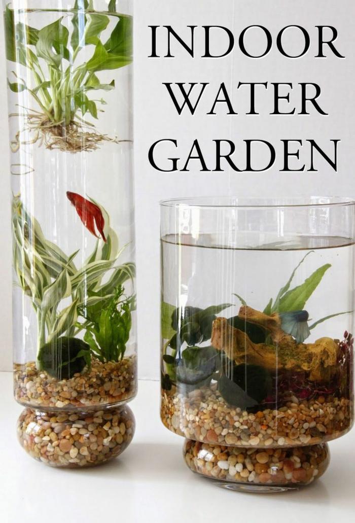 intérieur plante aquatique