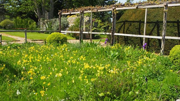 jardin médiéval herbes aromatiques