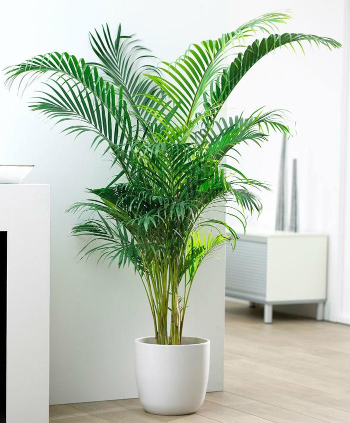 Comment R Ussir Votre Palmier D 39 Int Rieur Pour Profiter De Son Exotisme