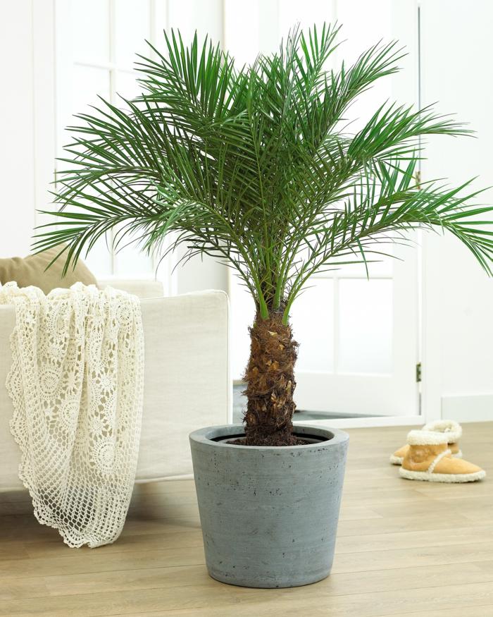 Comment r ussir votre palmier d 39 int rieur pour profiter de son exotisme - Racine d un palmier ...