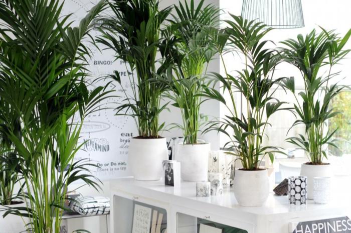 palmiers salle à manger