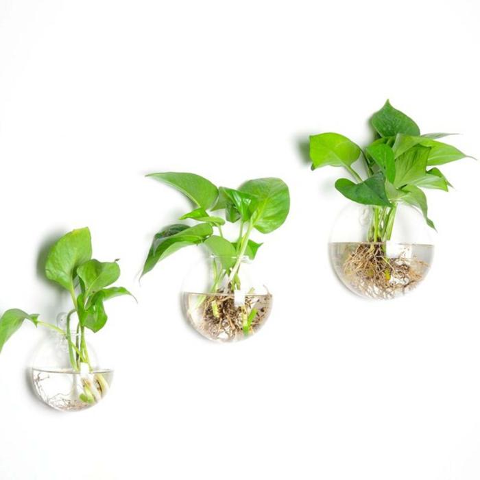 plante aquatique déco murale