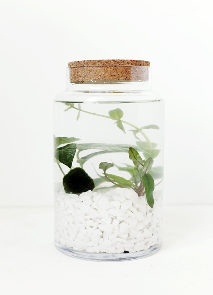 plante aquatique maison diy