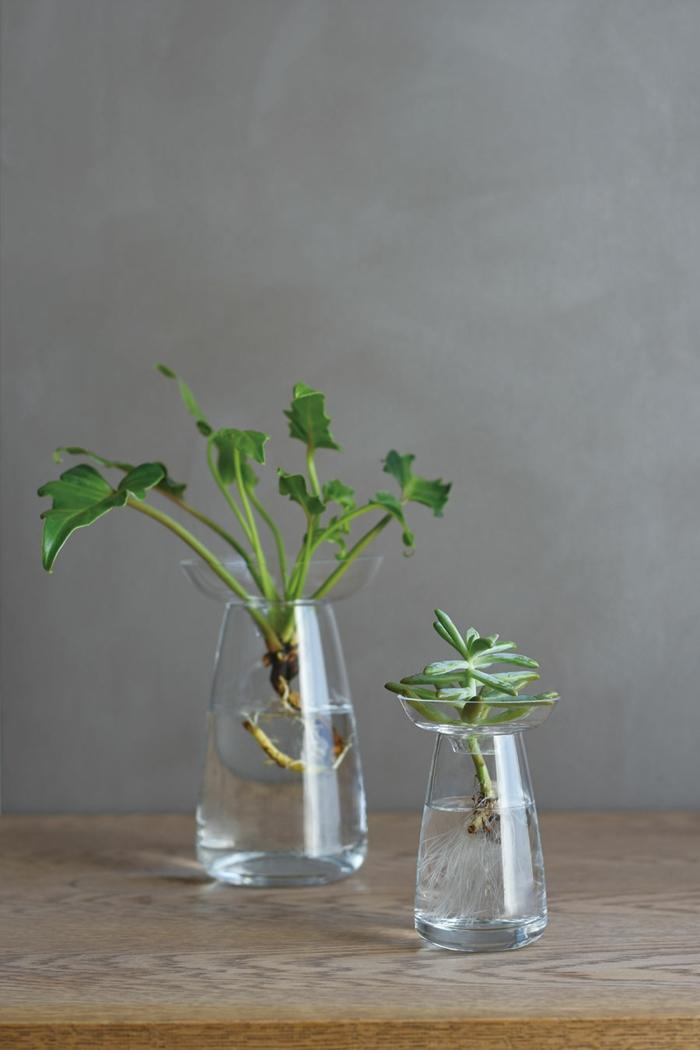 plante aquatique pour votre intérieur