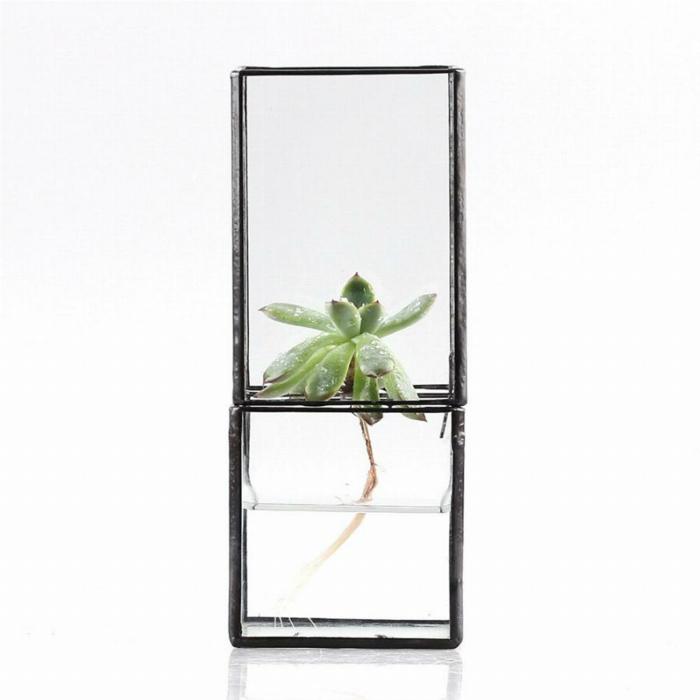 la plante aquatique d coration int rieur et ext rieur. Black Bedroom Furniture Sets. Home Design Ideas