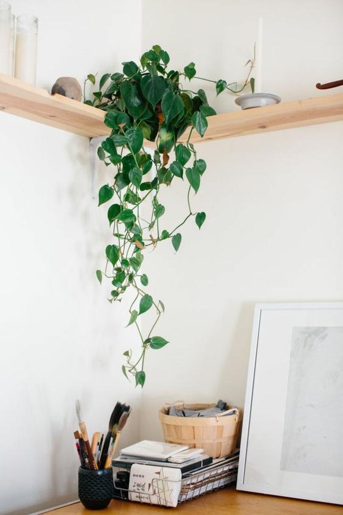 plante d 39 int rieur super d co et facile d 39 entretien la. Black Bedroom Furniture Sets. Home Design Ideas