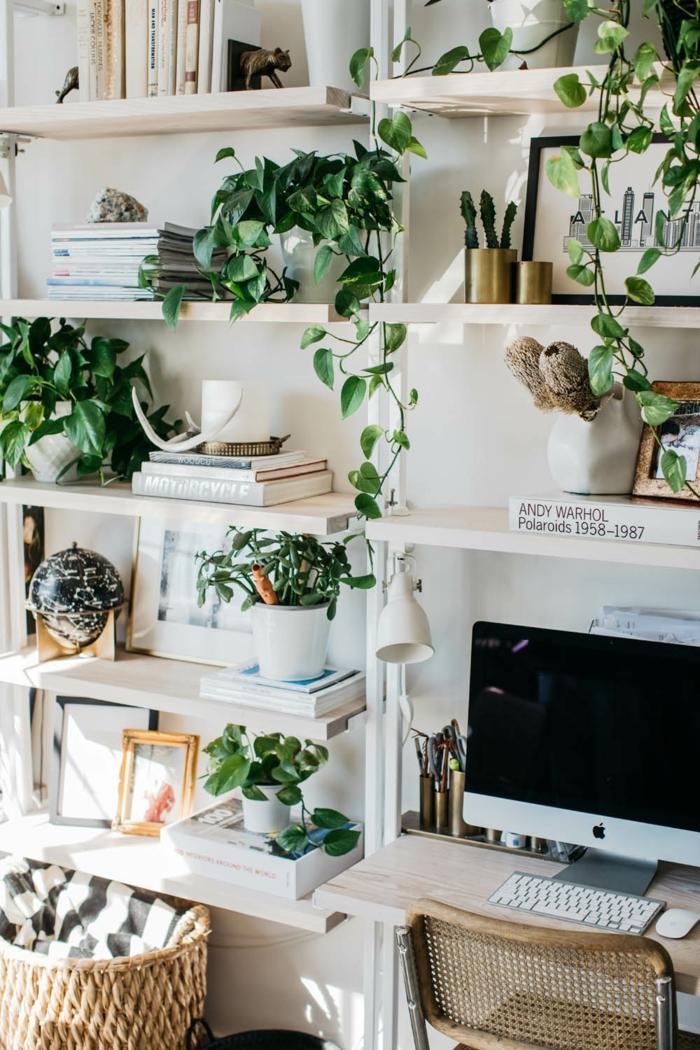plante d 39 int rieur super d co et facile d 39 entretien la vigne d 39 appartement. Black Bedroom Furniture Sets. Home Design Ideas
