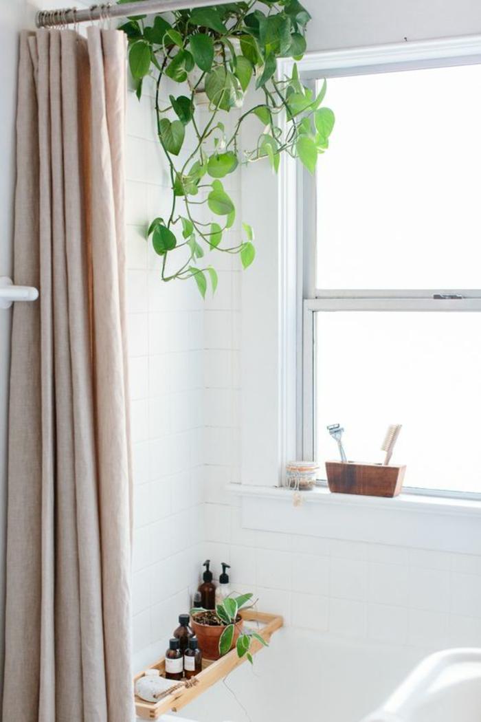 vigne d'intérieur plante grimpante