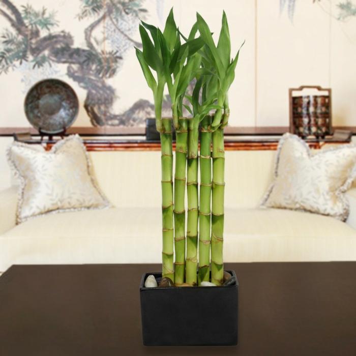 bambou d'intérieur cinq tiges
