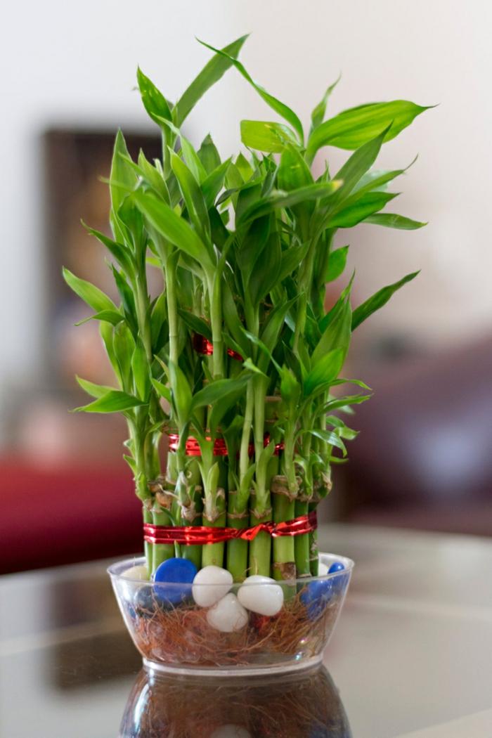 bambou en pot galets décoratifs