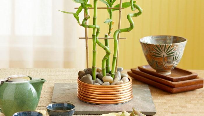 bambou intérieur déco