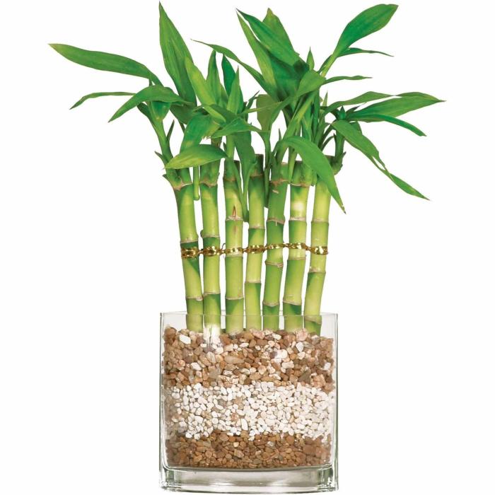 bambou pot de verre