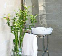 Bambou d 39 int rieur comment cultiver cette plante exotique for Plante bambou salle de bain