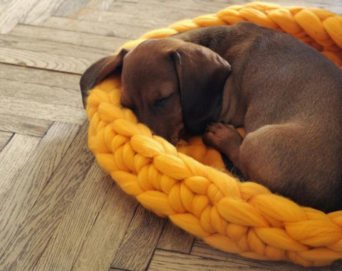 douce et confortable pour votre chien