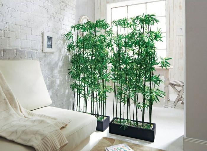 grand bambou en pot intérieur