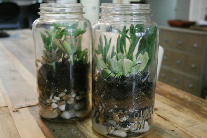 terrarium bocaux plantes