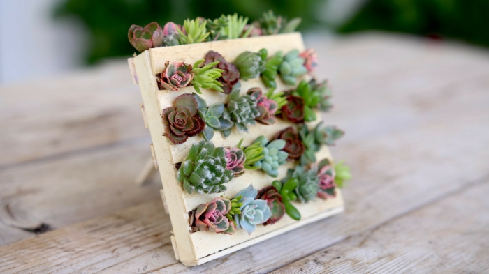 idée avec plantes diy cadeau noël