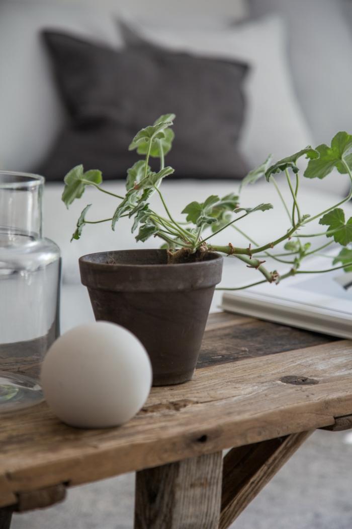 plantes vertes pour une pièce lagom