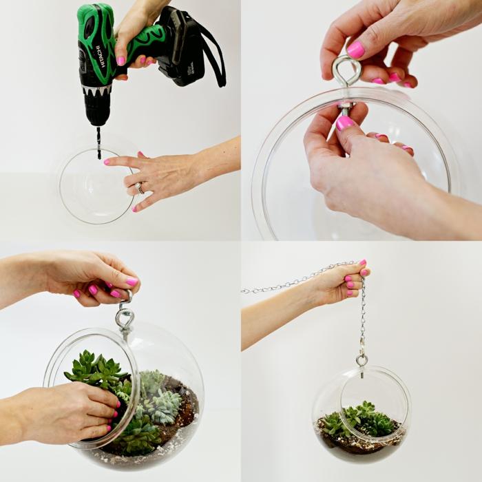 étaper comment faire un terrarium avec une plante succulente