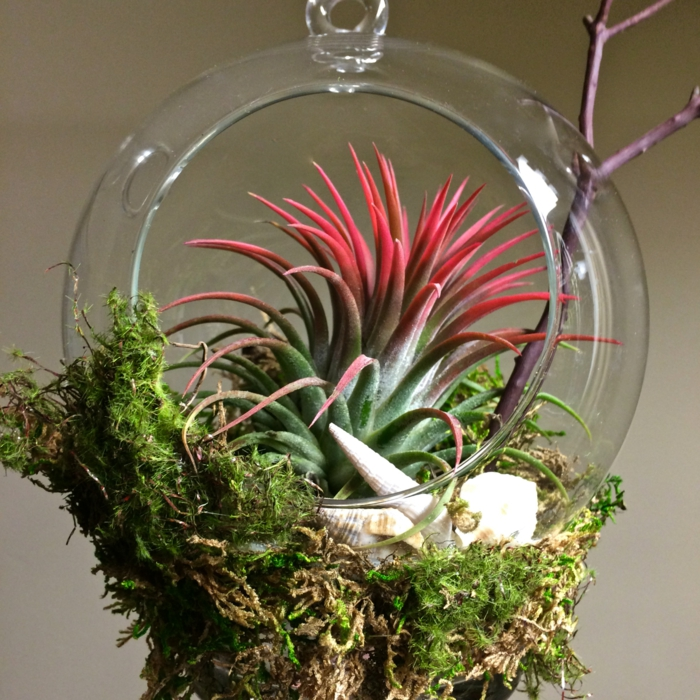 comment créer un terrarium plantes grasses