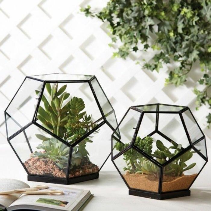 comment réaliser un terrarium plantes grasses