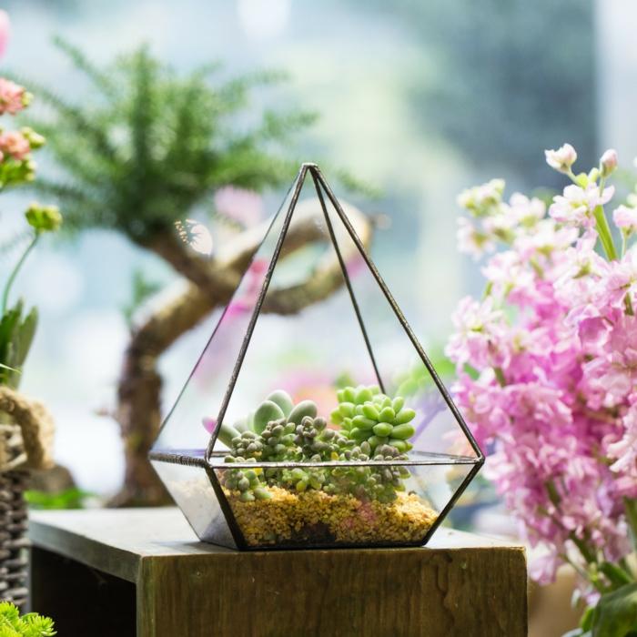 diy terrarium plantes grasses