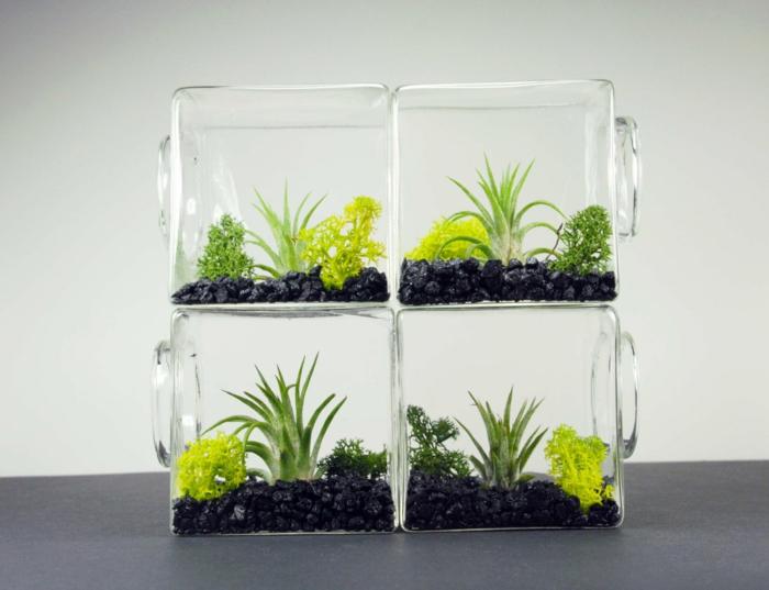 idée créative terrarium plantes grasses