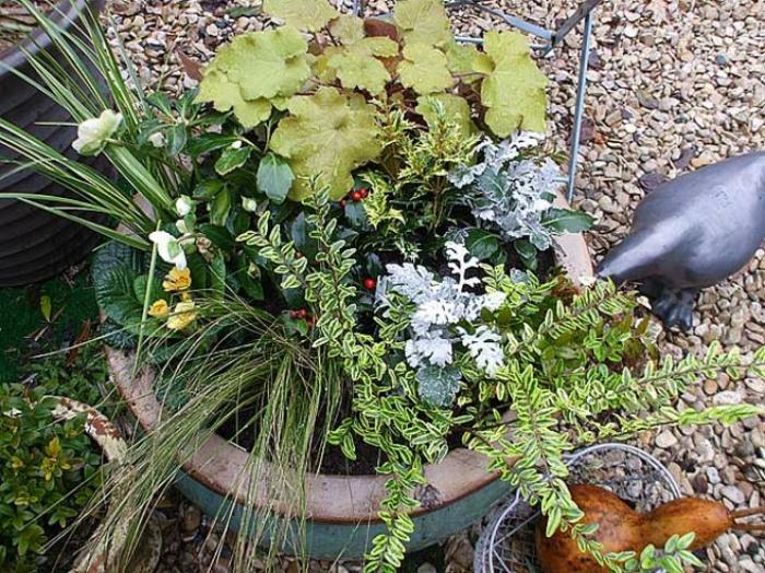 idée de composition jardinière d'hiver