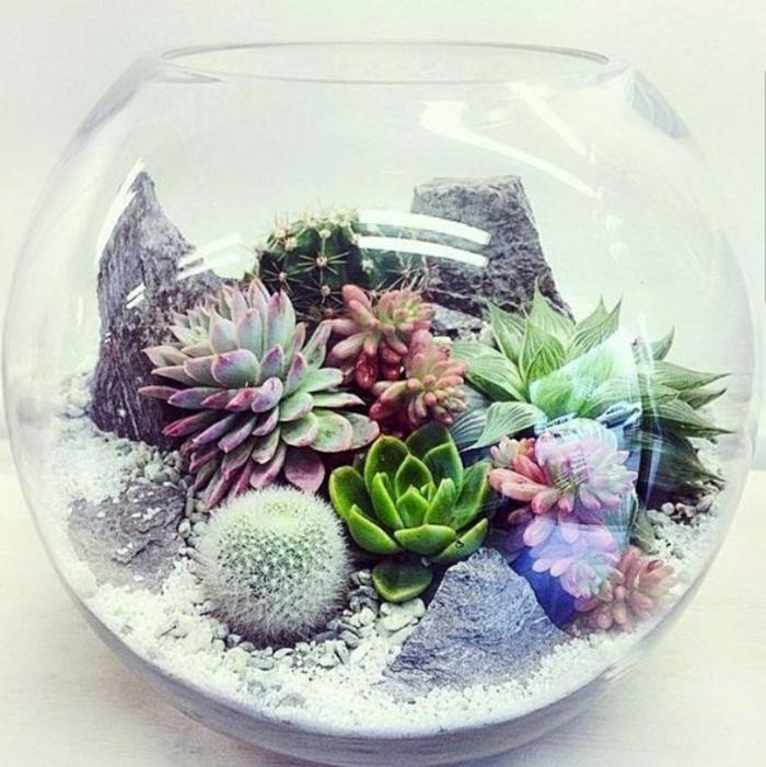 idée de terrarium de plante succulente